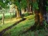 footpath-at-harryfields_web